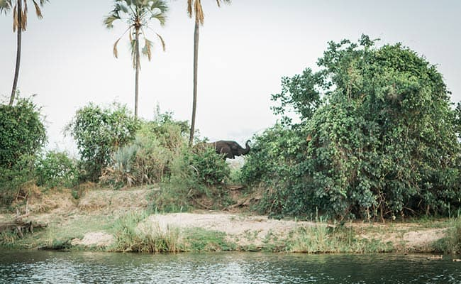Ellie along Zambezi banks