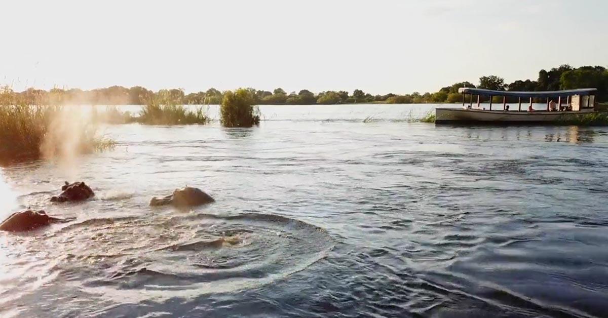Hippos Zambezi River Raikane Up Zimbabwe