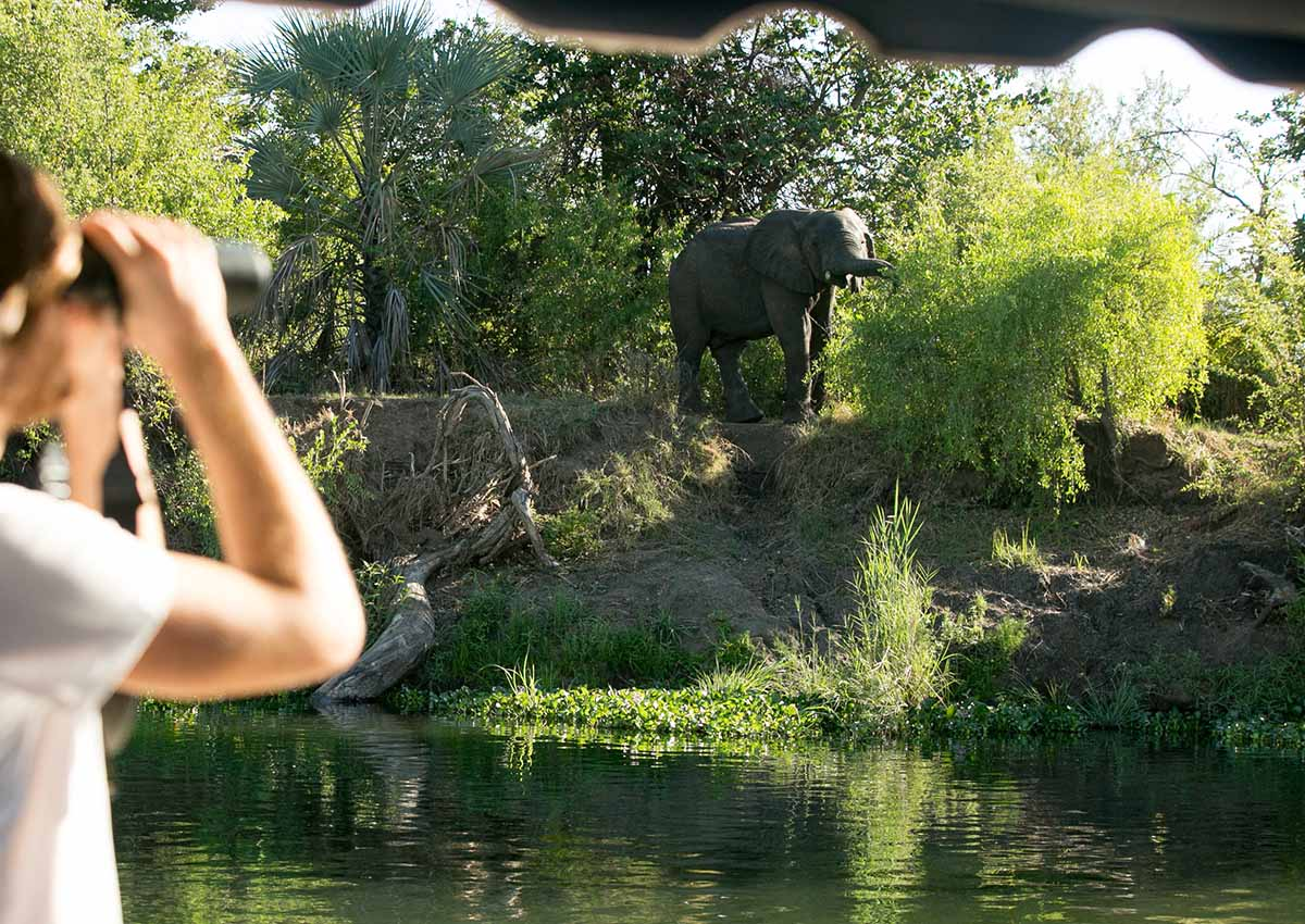 Watching Elephants Zambezi River