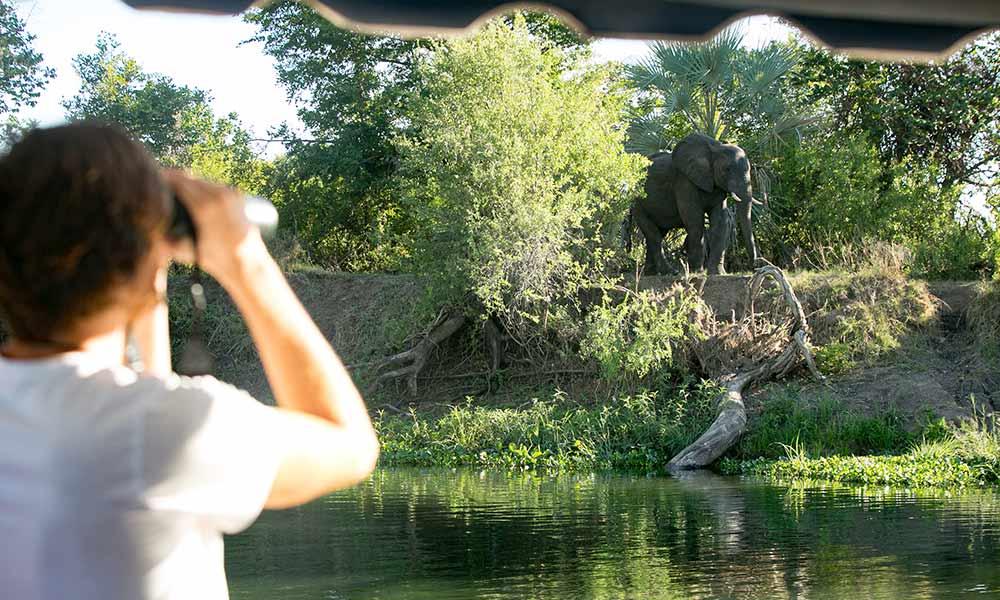 Birdwatching Cruise Ra-Ikane Victoria Falls Zimbabwe