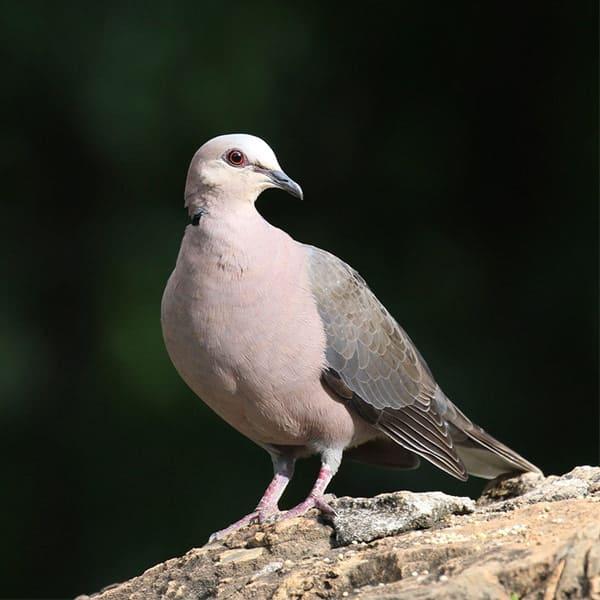 Bird Watching Cruise Ra-Ikane